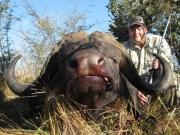 Africa - Namibia - Cape Bushmanland Buffalo