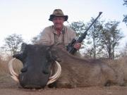 Africa - Zimbabwe - Warthog