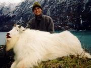 United States - Alaska - Mountain Goat