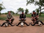 3 Nile Buffalo in Uganda