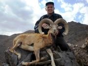 armenian mouflon hunting in iran