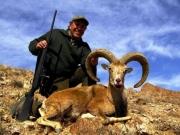 laristan mouflon hunting in iran