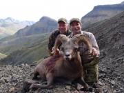 Siberian Sheep Russia