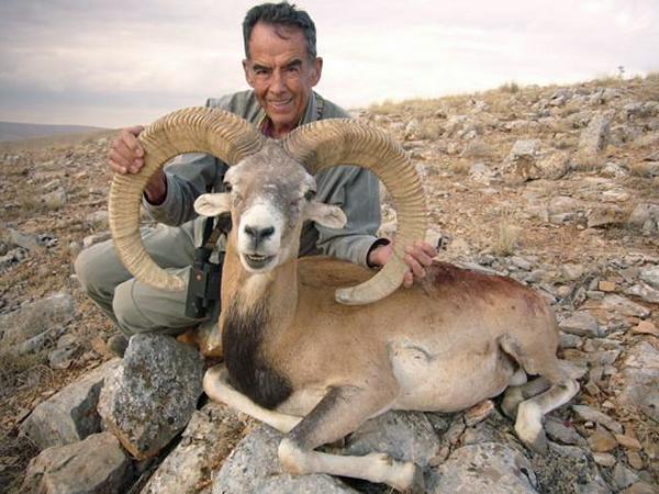 Trophy Konya Mouflon Sheep Hunting in Turkey