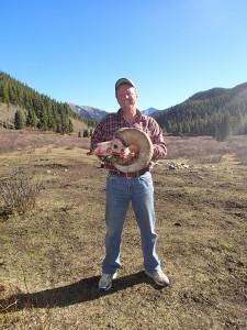 Bighorn Sheep ram skull in Alberta hunting camp